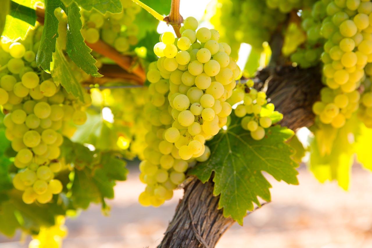 Bijzondere Bourgogne wijnen