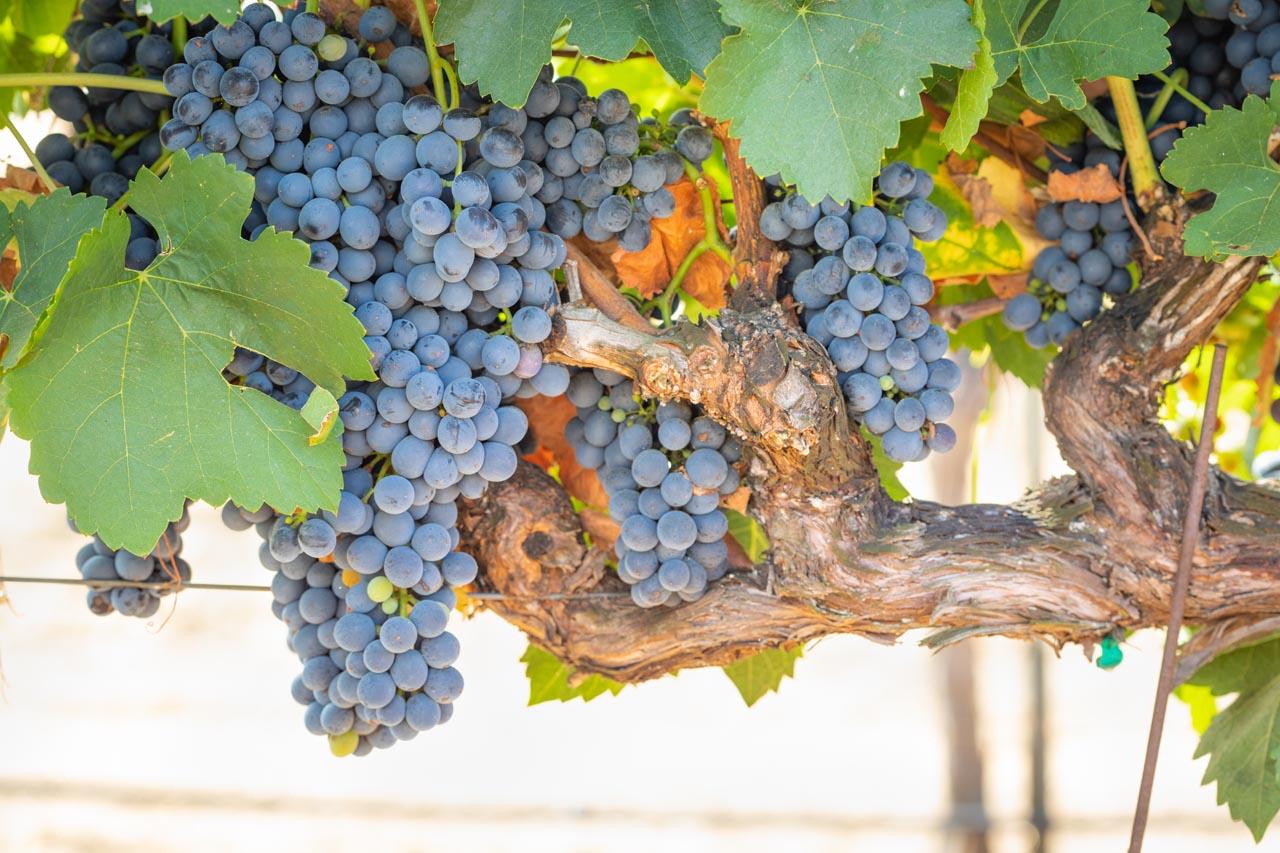Bijzondere Bordeaux wijnen